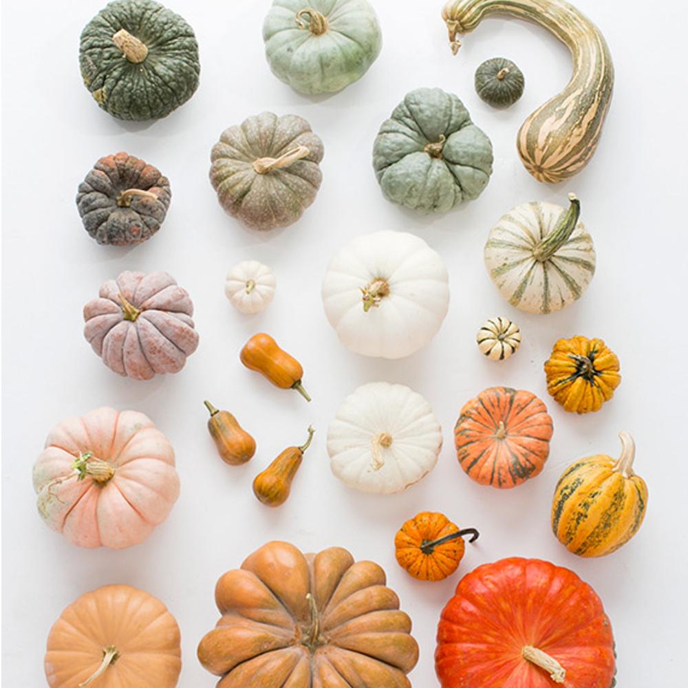 colour scheme, ombre, shades, pumpkins