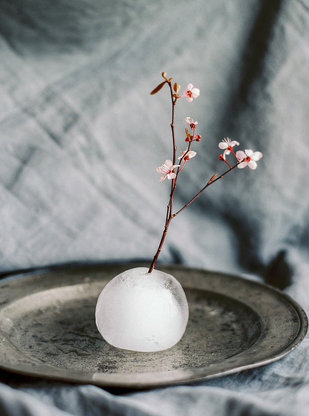 Ice vase with blossom