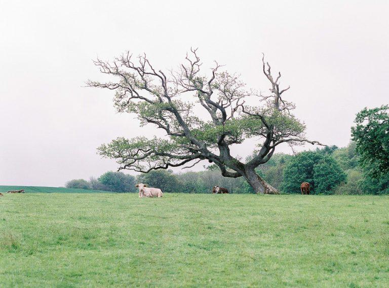Fields of Clovelly