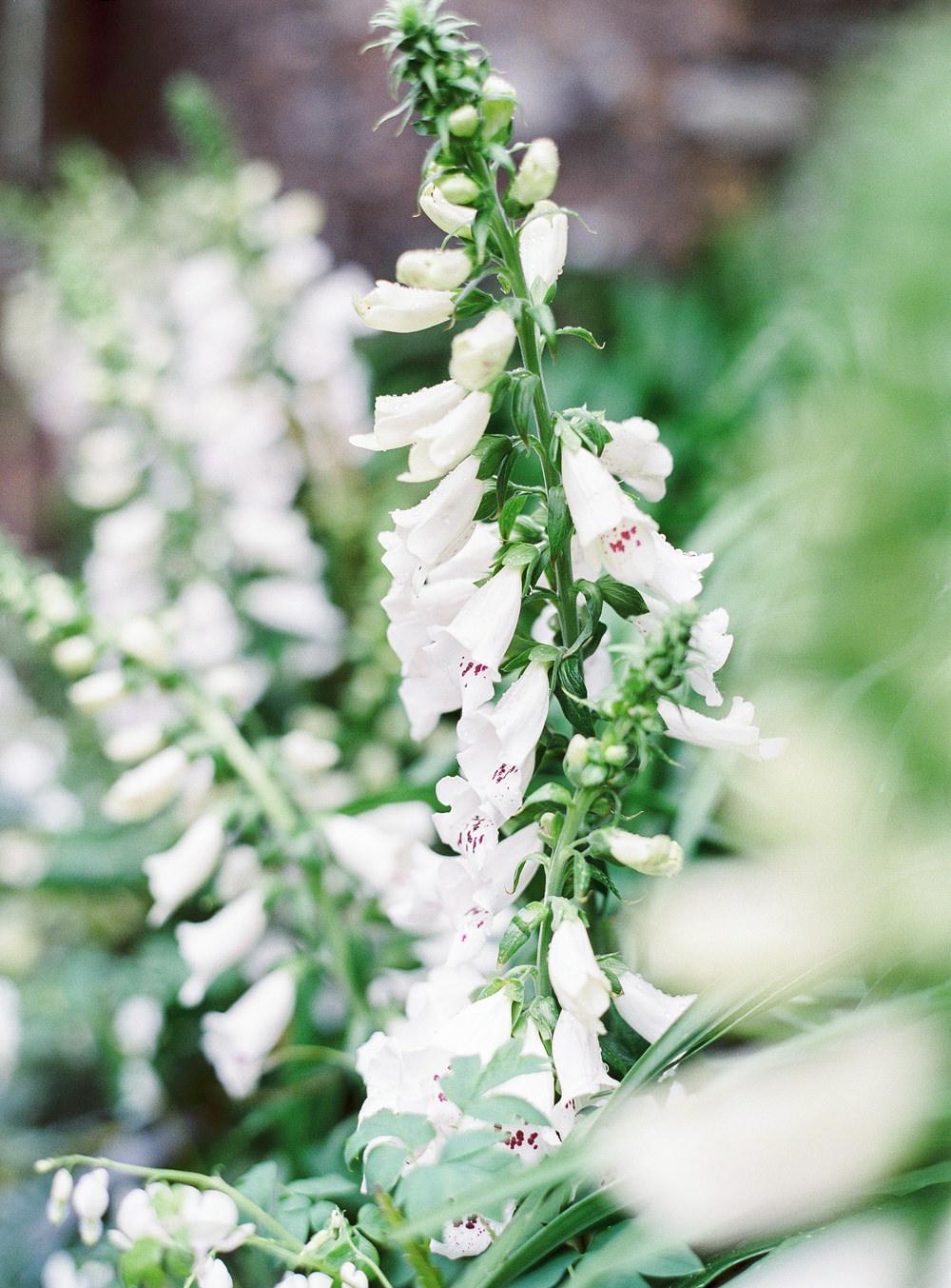 Foxglove floral arrangement