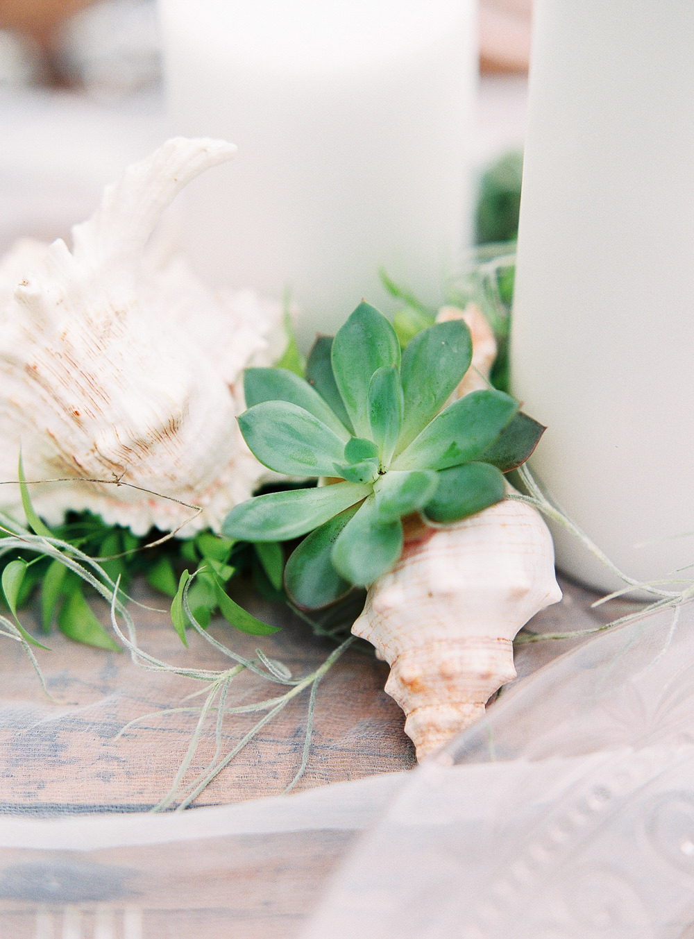Shells and succulents tablescape