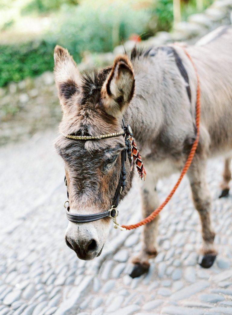 Clovelly donkey on cobbled street