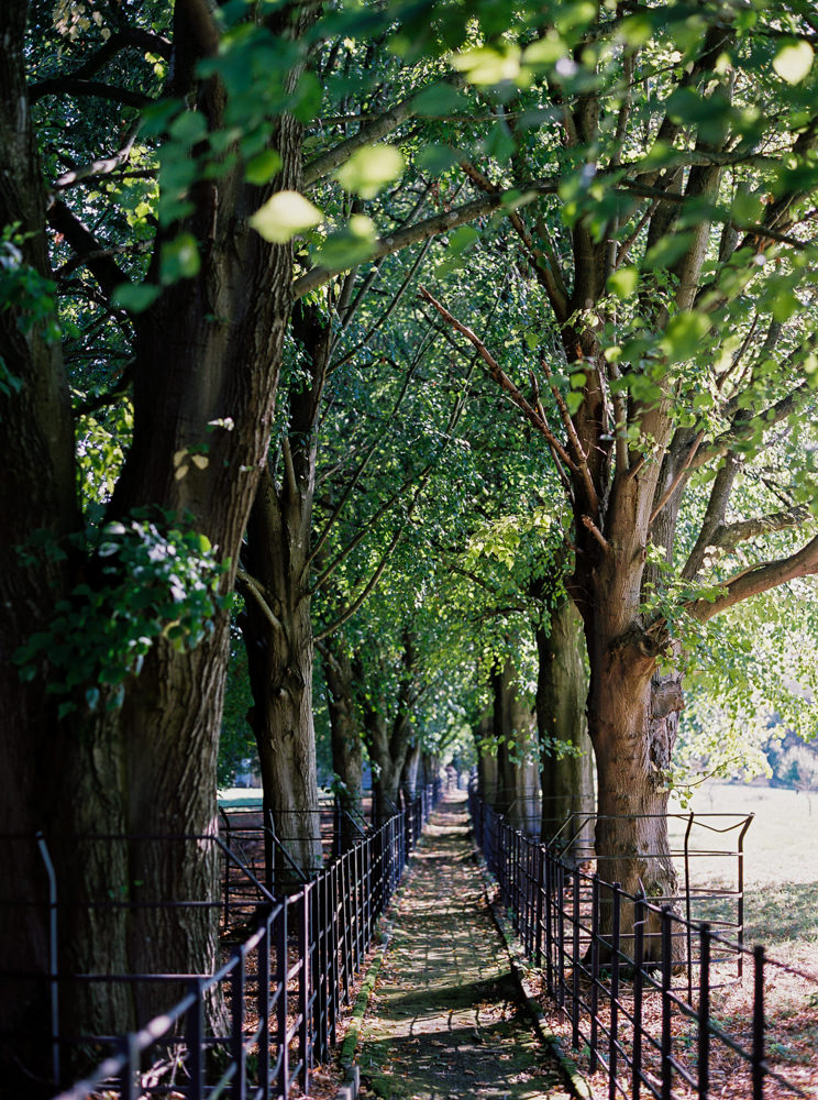 Cornwell Manor tree walkway