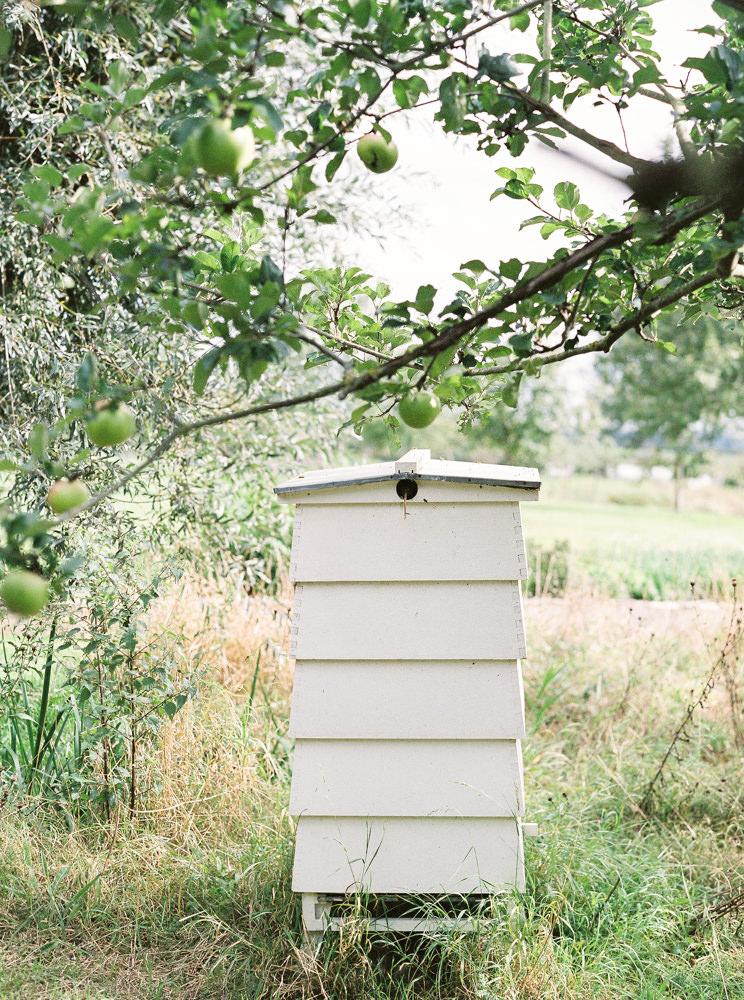 Daylesford beehive under the apple trees.